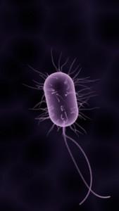 enterococcus sp okozta húgyúti gyulladás, Escherichia coli baktériumok okozta fertőzés, inkontinencia, hólyaghurut,
